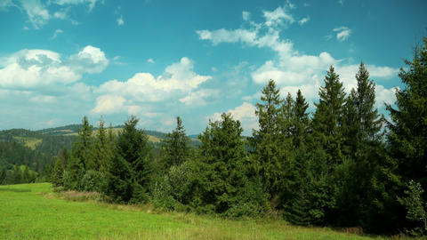 4K Timelapse of clouds and beautiful green coniferous trees Footage