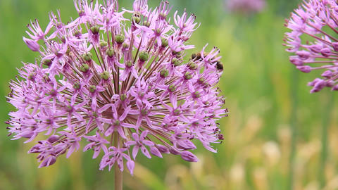 Worker bee Footage