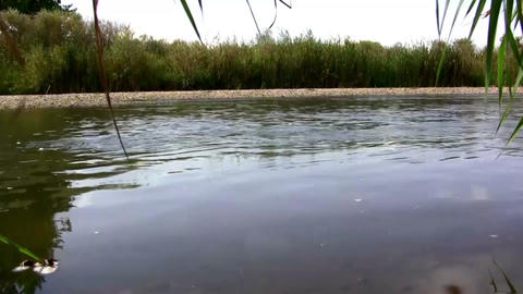(Seamless Loop) Creekside Wetland Waterflow Shot.  stock footage