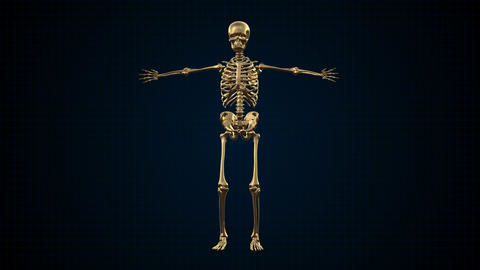 4K Skeleton Loopable Pack