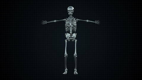 4K Skeleton Loopable Pack 0