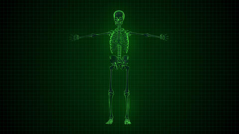 3D Animation of Human Skeleton x ray green interfa Footage
