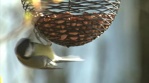 Bird Feeder Footage