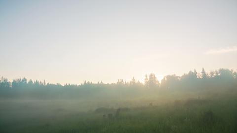 Summer forest sunrise timelapse 4K Footage