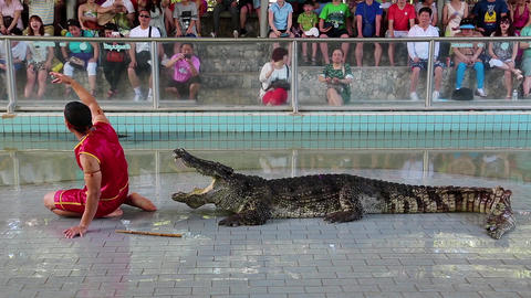 Crocodile show Live Action