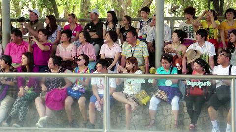Spectators at crocodile show in Pattaya, Thailand Footage