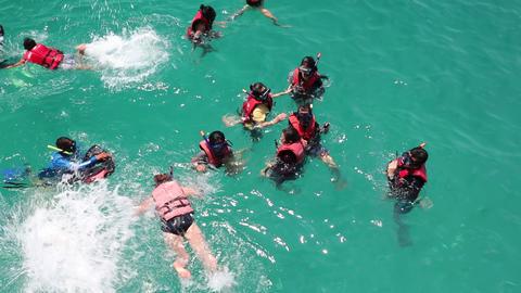 Snorkelers swimming in sea Footage