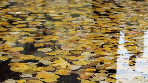 Autumn Foliage Floating Footage