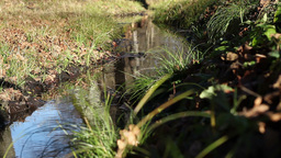 Autumnal Small Water Stream stock footage