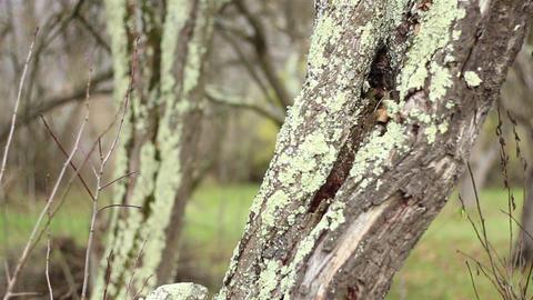 Lichens on Tree Bark Footage