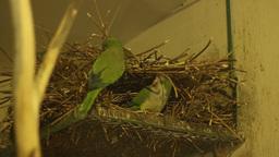 Parrots Nest Footage