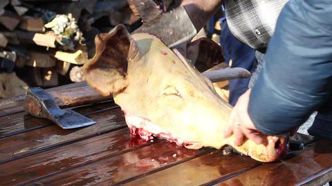 Slaughtering Pork Footage
