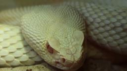 Snake Eye stock footage