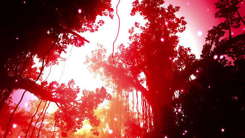 4 K Mysterious Deep Jungle Fireflies in the Sunset Animation