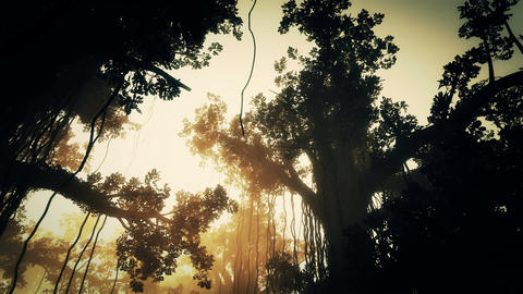 4 K Mysterious Deep Jungle in the Sunset Sunrise 3 Stock Video Footage
