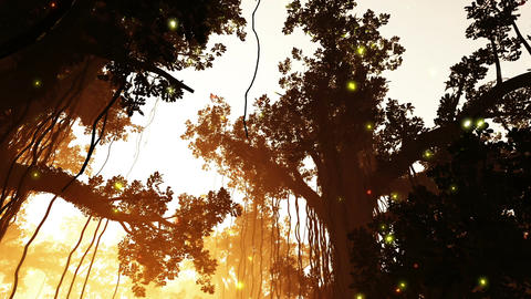 Mysterious Deep Jungle Fireflies in the Sunset Sun Animation