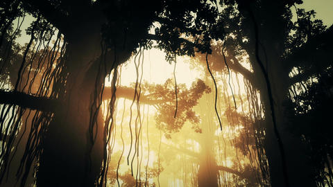 Mysterious Deep Jungle in Water 10 Stock Video Footage