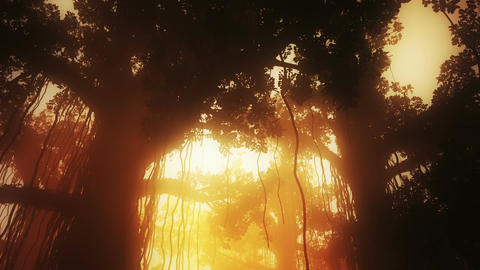 Mysterious Deep Jungle in the Sunset Sunrise 3 D A Stock Video Footage