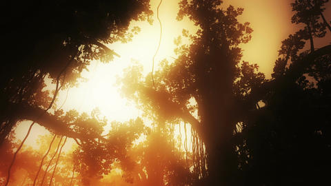 Mysterious Deep Jungle in the Sunset Sunrise 3 D A Animation