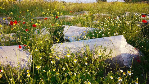 Red poppies flowers near ancient ruins in Side, Tu Stock Video Footage