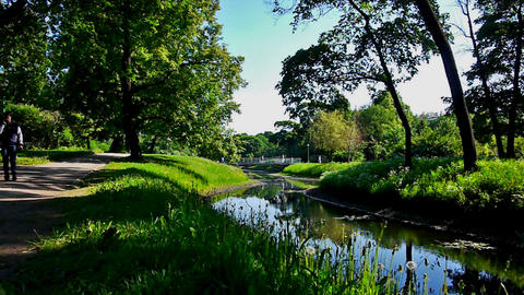 Green park with small river Stock Video Footage