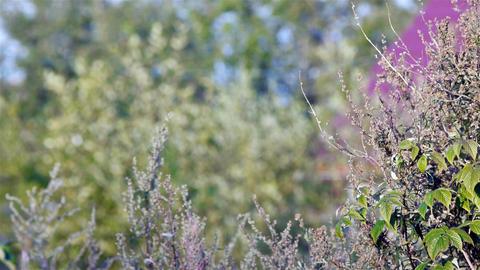 Summer meadow Stock Video Footage