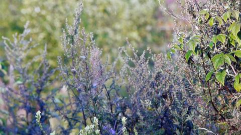 Summer meadow Footage