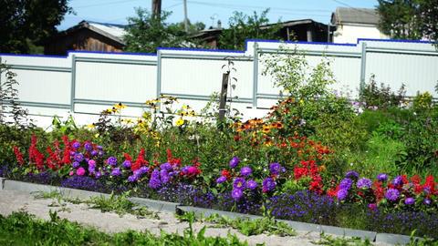Purple flowers of flowerbed Stock Video Footage