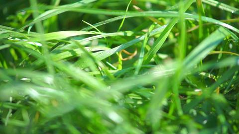 Green grass closeup view Footage