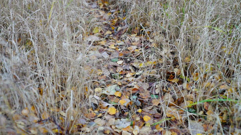 Forest path strewn with autumn leaves Stock Video Footage