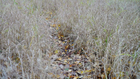Forest Path Strewn With Autumn Leaves stock footage