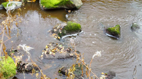 Rocks and autumn leaves in narrow river Footage