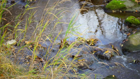 Fast river flow in autumn forest Stock Video Footage