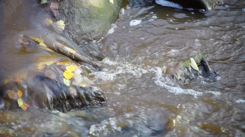 Fast river flow with bubbles and autumn leaves Footage
