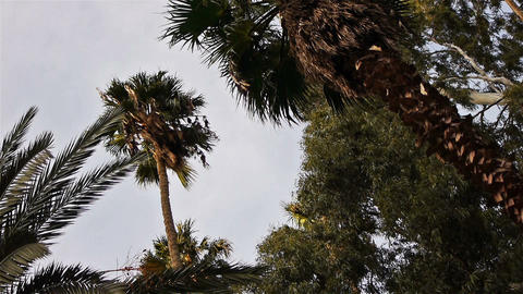 Tropical palms with green leaves Footage