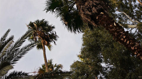 Tropical palms with green leaves Stock Video Footage