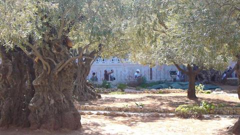 JERUSALEM, ISRAEL -November, 02: Garden of Gethsem Footage