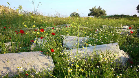 Red poppies flowers near ancient ruins in Side, Tu Footage
