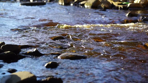 Wild forest river in sunny day Footage
