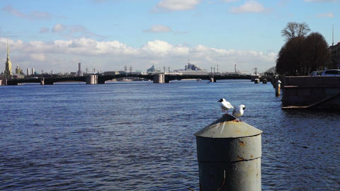 Neva river quay with white seagulls, St. Petersbur Footage