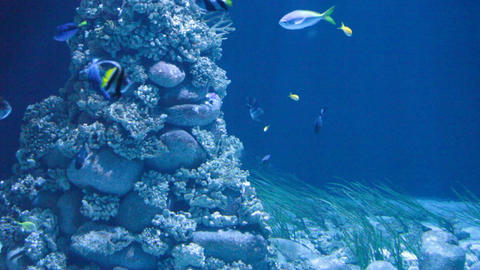 Shark Floats Against A Coral Reef And Tropical Sma stock footage