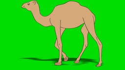 CAMEL WALK slow Stock Video Footage