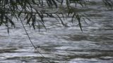 Mountain river - nat sound Footage