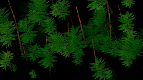 Animation of green leaves,algae,Herbalmountains,love,reproduction,particle,joy,happiness,happy,Desig Animation