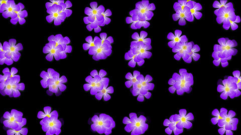 Animation of purple wild flower background Stock Video Footage