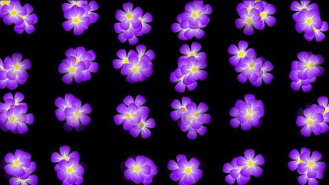 Animation of purple wild flower background Stock Video Footage