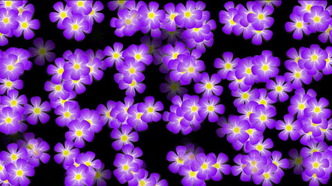 Animation of purple wild flower background Animation
