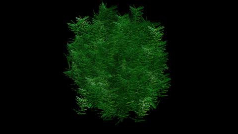 Tree shaking digital... Stock Video Footage