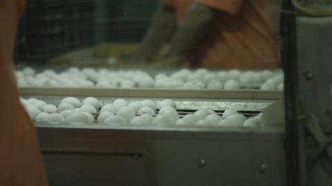 Eggs On Production Line 2
