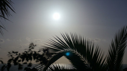 1080p, Beautiful morning sun with palm(s) in front Footage